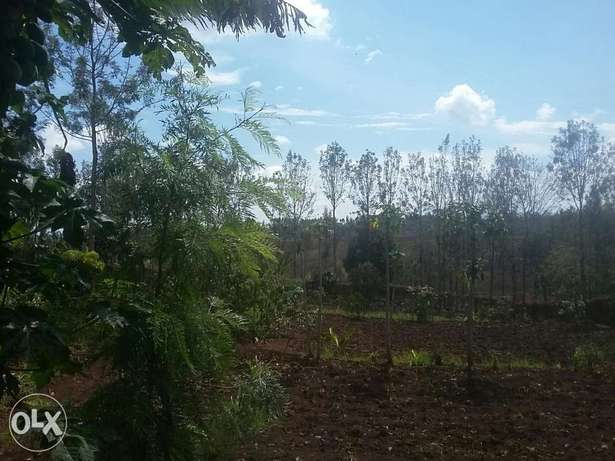 kenol plots 1/2 acre. 2km from the highway Thika - image 3