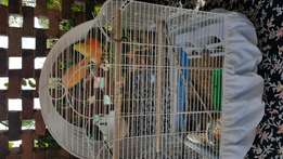 3 beautiful canaries and cage for sale