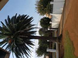 Beautifull palm for sale