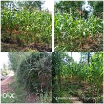 1/4 plot for sale at Kenol. Approximately 900 meters off tarmac.
