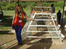 Chicken cage manufacturer from China