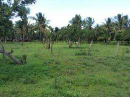 Prime Plot for Sale 50 by 100 Shanzu area with Title