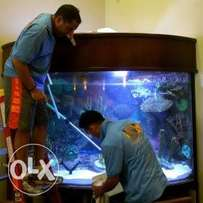 Aquarium tank maintenance