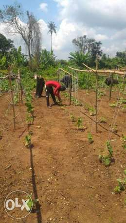 Affordable 3600 sqm Farm Land for sale at 700k Amuwo Odofin - image 3