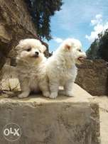 Adorable puppies.