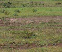 Runda 1 acre For Sale,in a serene environs.