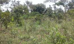 GAYAZA: Bulami: One acre for sale about 800 metres from tarmac road