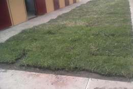 Instant lawn , installation and site clearance