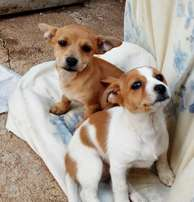 adorable loveable puppies