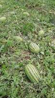 10 acres in kirinyaga