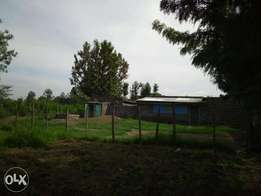 2 50*100 Plots at Kiamunyeki Lanet Nakuru
