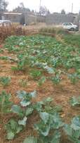 Prime plots for sale in Ruiru, Kimbo