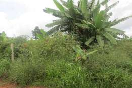 Seure 5 acres of land for sale in luweero-kikyusa at 5m per each