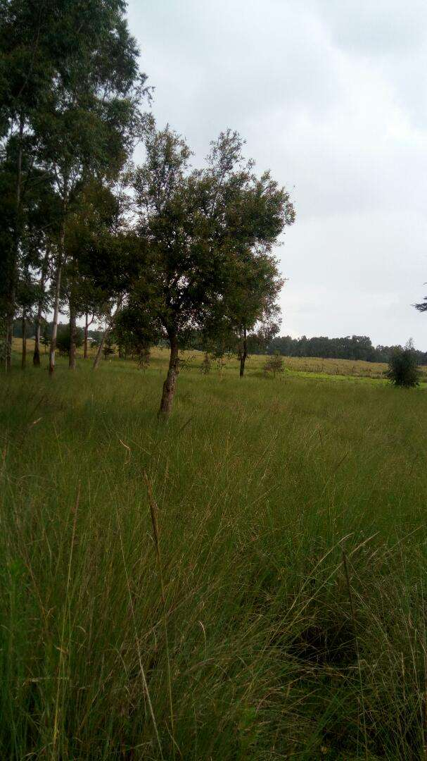 53 Acres For Sale In Kinangop Miharate 1 2 Km From Tarmac