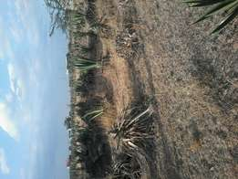 1 plot left. 40*60 plots at mastore juja. Ksh 450k.