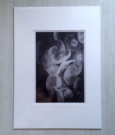 Ikea Bild Obraz Plakat W Paspartu Meduzy 50x70 Cm Styl
