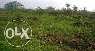 Half Acre of Land For Sale Ughelli North - image 2