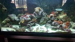 Marine Tank With Alot of Extras!