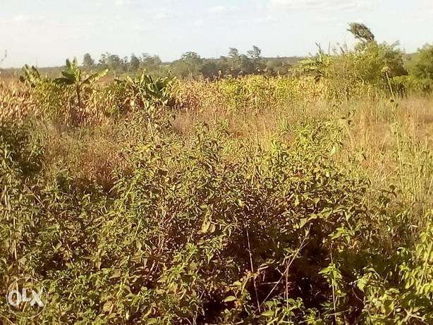 Juja 100x100 1/4 acre plots for sale Ruiru - image 3