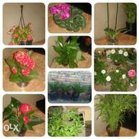 Plants and herbs for sale