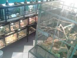 Exotic Petshop Reptiles and Mammals