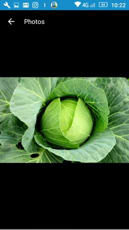 Fresh cabbages ready from the farm Nakuru East - image 2