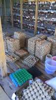 Chicken cages for 1024 layers