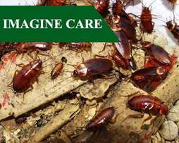 Hire Trusted Pest Control & Fumigation Experts. Ksh 500 Discount Today