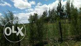 1 acre plot ni nanyuki town