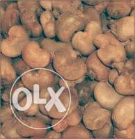 Nigeria:raw cashew nuts for sale