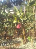 3/4 acre in githiga kiambu