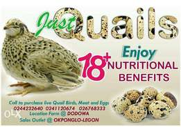 Organic quail eggs and birds (live and meat)