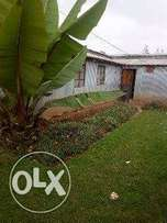 Plot with ready title deed and semi permanent house