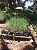 Seedlings available for sale