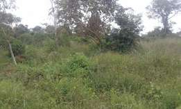 GAYAZA:BULAMI:4acres for sale at 16m per acre with ready title