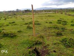 Special offer- 50x100 plots