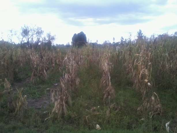 2 adjacent 1/8th acre vacant plots for sale behind Laikipia Campus Nakuru East - image 2