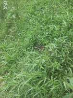 Am selling 6 acres of land in Nyimbwa bombo