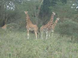 laikipia ranch of 50000 acres has the big five wild animals is on sale