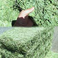 Best Quality Lucern Bale, Teff and Oathay Bales