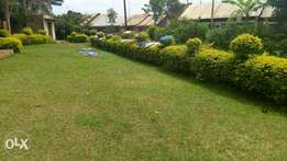 Cheap plot for in kitende for quick sale