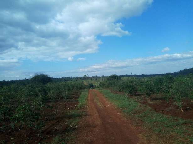 Quick sale 1 acre second row from mati rd meru county. Huruma - image 4