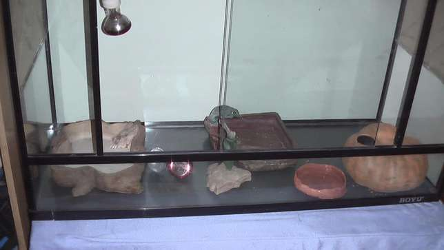 Lizard cage with accessories Bloemfontein - image 2