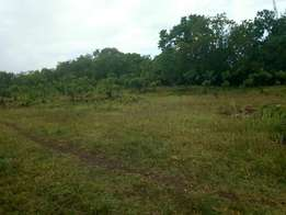 •Fenced half (1/2)acrea •Plot on 2nd row beach •Tiwi before diani •Bea