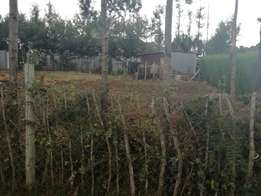 1/8 plot with title rolyton 250metres from tarmac