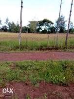 6acres at 1.3m per acre Rurii