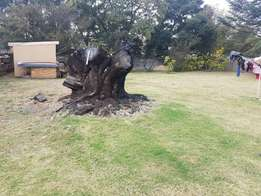 Unwanted Tree Removals