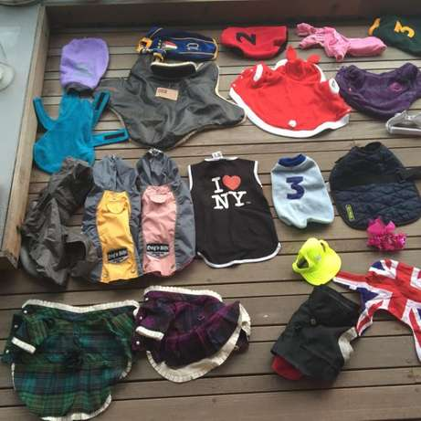 Dog Clothes & Leashes; Small Breed; VERY high Quality & Large Quantity Hout Bay - image 3