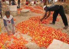 Tomatoes on Sale Meru Town - image 1