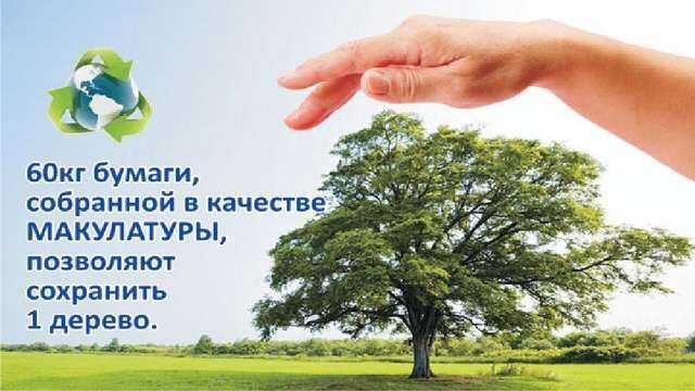 Сколько макулатуры сохранит дерево сколько стоит макулатура в москве цена за 1 кг